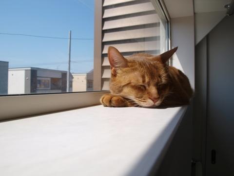 窓とジョゼ06(2010.05.23)
