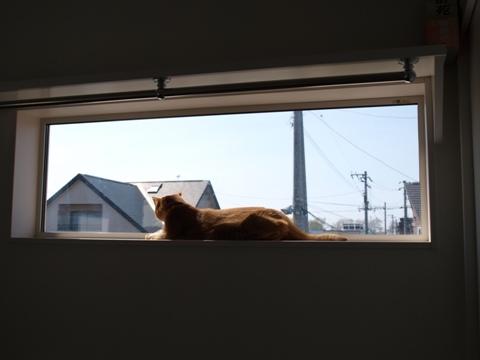 窓とジョゼ09(2010.05.23)