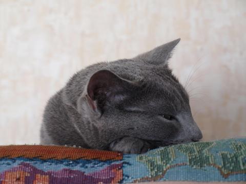 のびニコ05(2010.05.23)