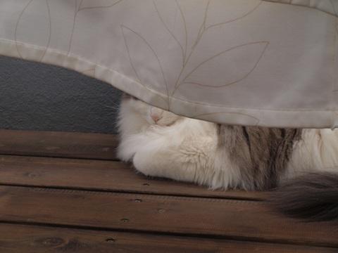 ひなたぼっこフレイ01(2010.05.29)