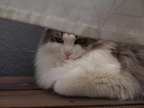 ひなたぼっこフレイ02(2010.05.29)