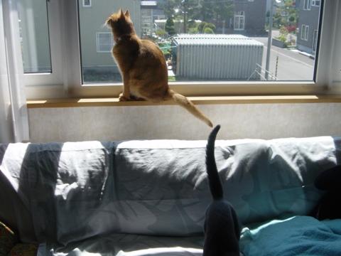 窓とジョゼ04(2010.05.29)