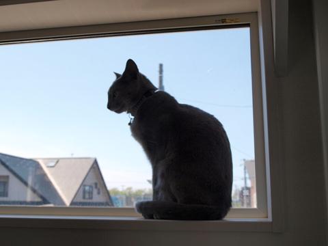 窓とニコライ01(2010.05.29)