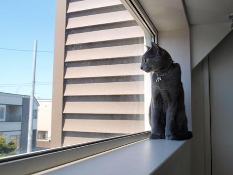 窓とニコライ02(2010.05.29)