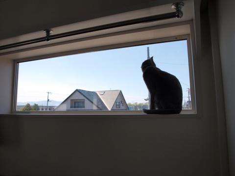 窓とニコライ06(2010.05.29)