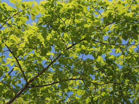緑(2010.06.05)