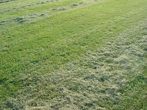 芝刈り跡(2010.06.07)