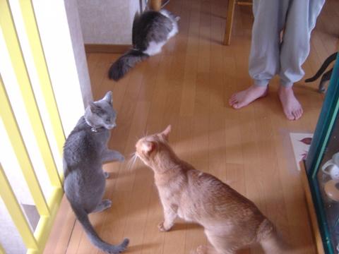 紛争勃発03(2010.06.16)