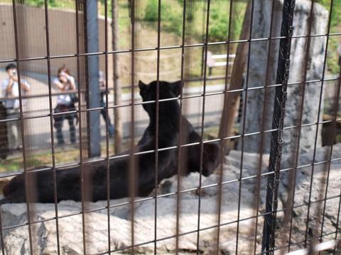 黒豹さん01(2010.06.19)