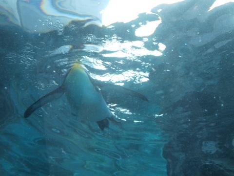ペンギンさん01(2010.06.19)