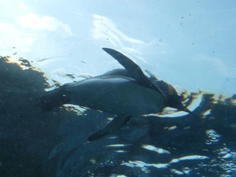 ペンギンさん02(2010.06.19)