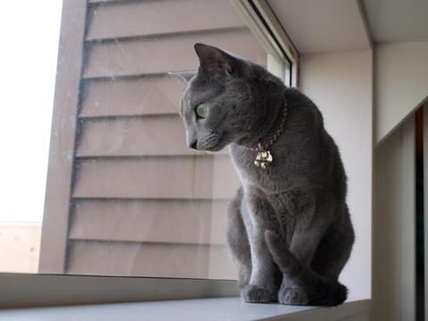 窓で黄昏るニコ(2010.06.23)