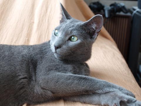 オジャマアレ01(2010.07.04)