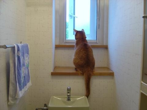 トイレのジョゼフィンちゃん01(2010.07.07)