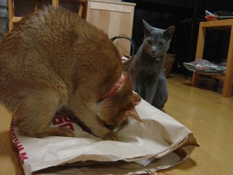 ジョゼフィンちゃん、何してるの03(2010.07.07)