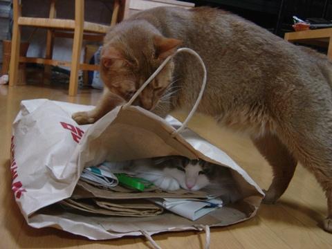 ジョゼフィンちゃん、何してるの04(2010.07.07)