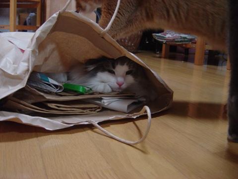 ジョゼフィンちゃん、何してるの05(2010.07.07)