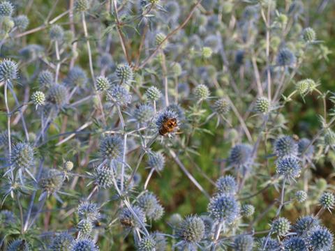 蜂さんです(2010.07.24)