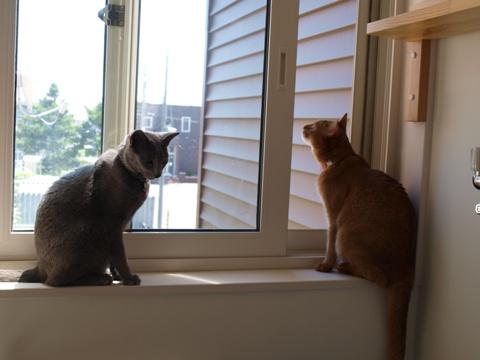 窓辺のニコジョゼ01(2010.07.25)