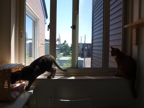 窓辺のニコジョゼ02(2010.07.25)