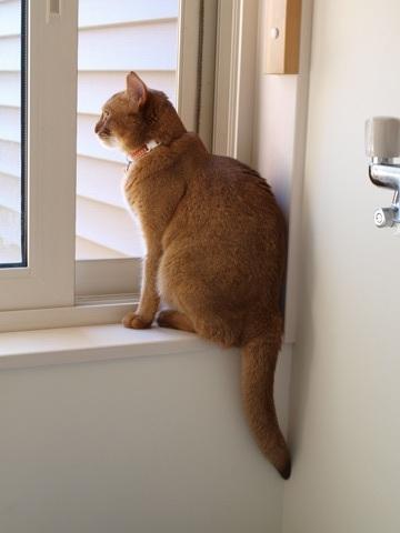 窓辺のジョゼ(2010.07.25)