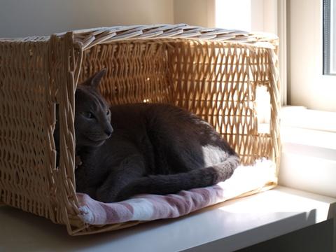窓辺のニコ(2010.07.25)