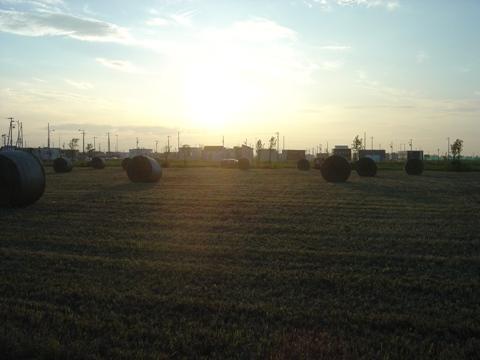 牧草ロール01(2010.07.26)