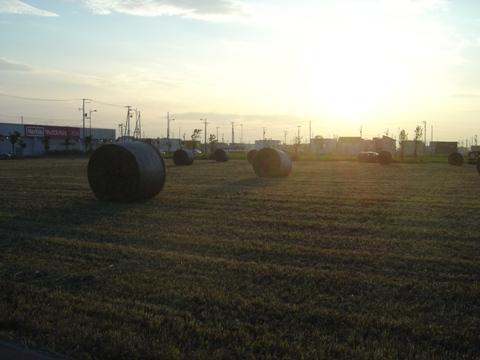 牧草ロール02(2010.07.26)