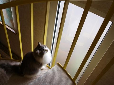窓さん窓さん01(2010.07.31)