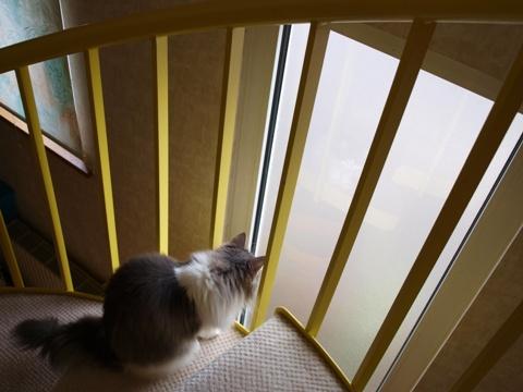 窓さん窓さん02(2010.07.31)