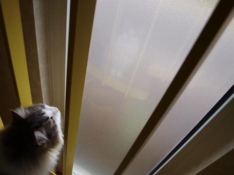 窓さん窓さん04(2010.07.31)