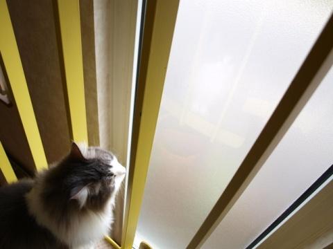 窓さん窓さん05(2010.07.31)