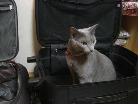 旅行準備02(2010.08.02)