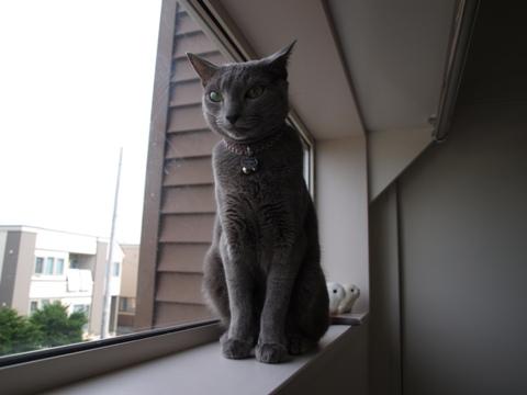 ニコライくん(2010.08.03)