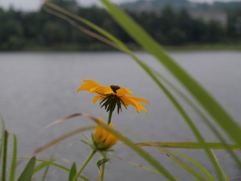 女神湖とその周辺05(2010.08.06)