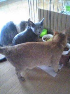 お食事中(2010.08.07)