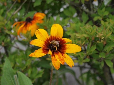 お鼻と蜂さん(2010.08.08)