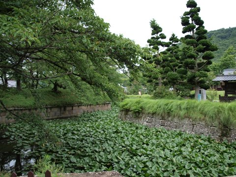 佐久の五稜郭04(2010.08.09)