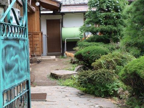 佐久のねこさん(2010.08.09)