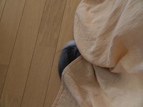 かくれフレ01(2010.08.10)