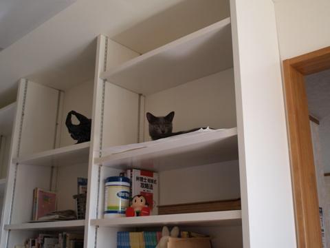 ニコライくんは書架の上でにんまり(2010.08.14)
