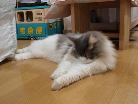 お手入れちう(2010.08.16)