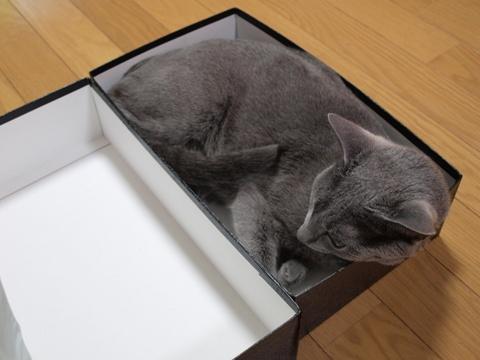 箱にゃん03(2010.08.17)