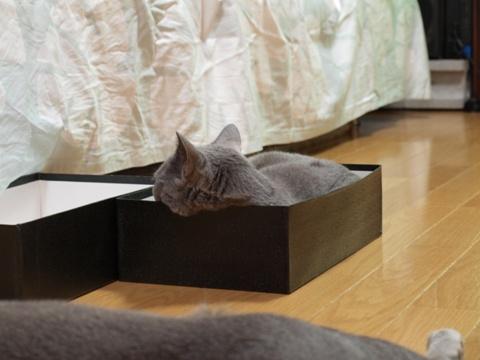 箱にゃん01(2010.08.17)