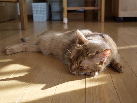 暑いなのよっ01(2010.08.18)