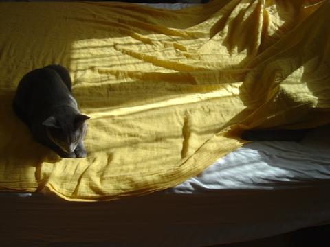 朝のひととき01(2010.08.20)