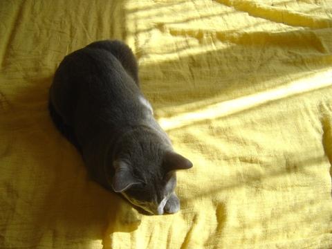 朝のひととき02(2010.08.20)