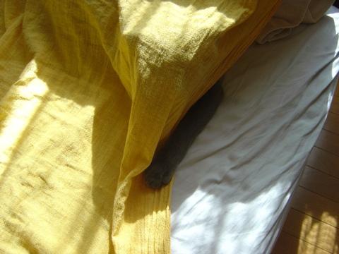朝のひととき03(2010.08.20)