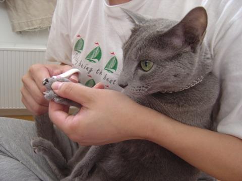 ダイキライ02(2010.08.22)