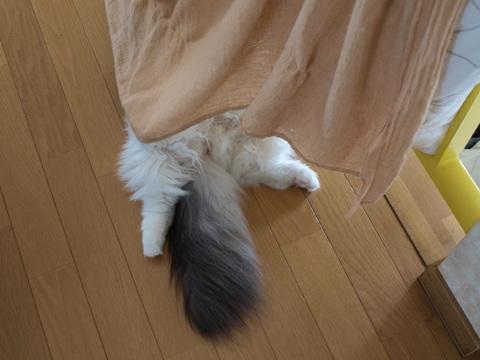 フレイヤちゃんの日常03(2010.08.21)